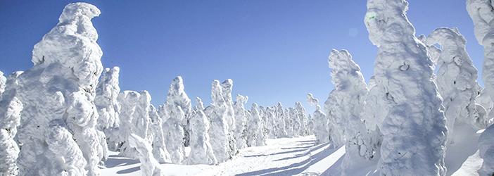 志賀高原は標高1000mから2300mの間にあり、スキー場の最高地点横手山山頂付近では条件により樹氷も見ることができます。見ることが
