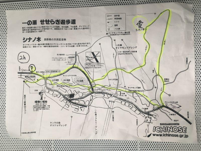 大きい!シナの木は長野県天然記念物