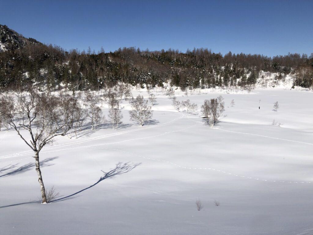 田ノ原湿原